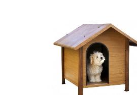 Mascotas Casa Ganadero